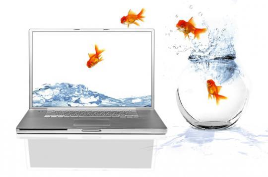 Notre capacité de concentration ne dépasse pas celle du poisson rouge