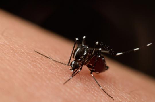 Un anticorps efficace contre Zika et la dengue