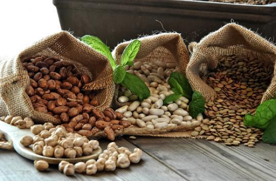 Longévité : les protéines végétales réduisent la mortalité cardiovasculaire