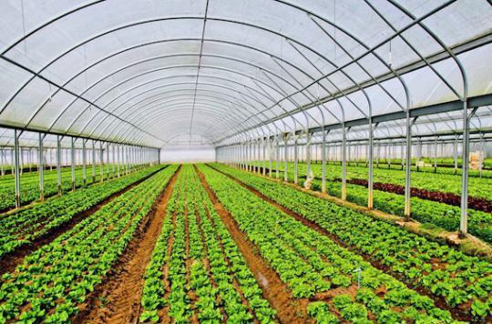 Nos salades polluées par des pesticides
