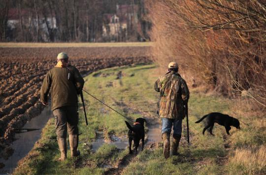 Chasse : attention au risque de tularémie