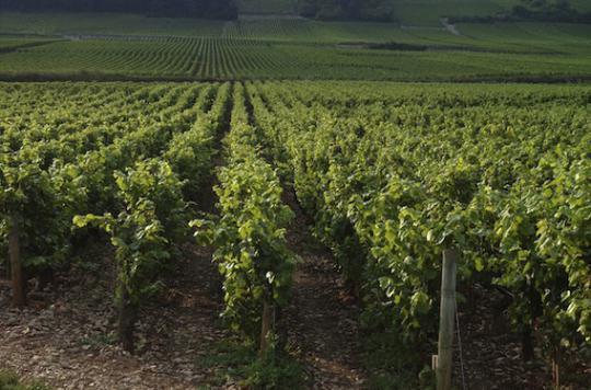 Campagne sur le vin : Une promotion déguisée de l'alcool