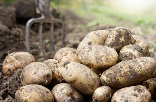 Clarebout Potatoes : la légionellose est bien en cause