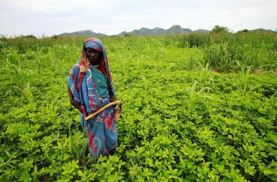 Faim dans le monde : le changement climatique va accélérer le processus