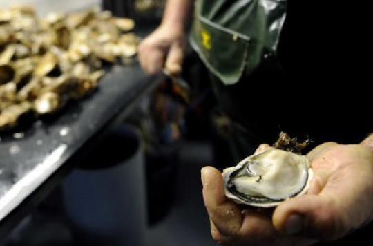 Norovirus : les huîtres favoriseraient les gastro-entérites