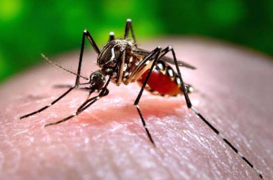 Espagne : premier cas autochtone de chikungunya