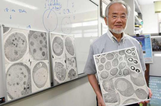 Nobel de médecine : l'autophagie à l'honneur