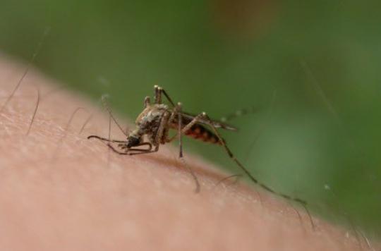 L'OMS veut éradiquer le paludisme avant 2030