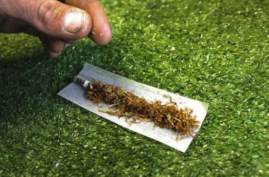 Cannabis :  le Pr Bertrand Dautzenberg prône la légalisation