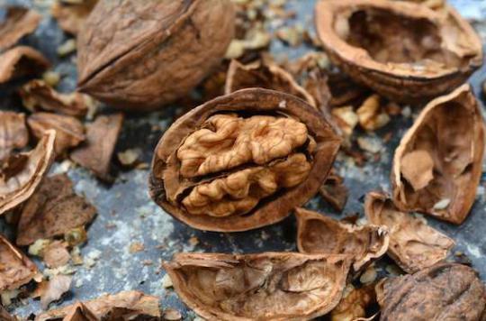 Manger des noix réduit le risque de mortalité prématurée
