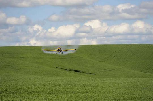 Pesticides : l'Europe tente de réintroduire des produits interdits