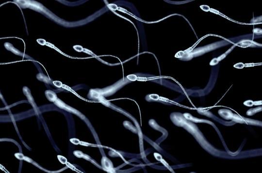 Fertilité : doit-on vraiment craindre une baisse de la qualité du sperme ?