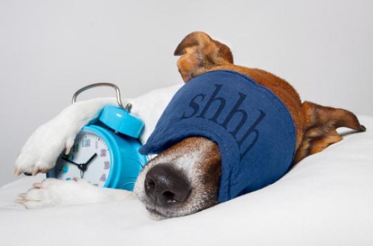 Sommeil : pourquoi dort-on si mal loin de chez soi ?