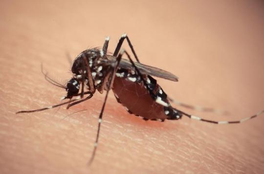 Zika : un antiviral contre l'hépatite C est potentiellement efficace
