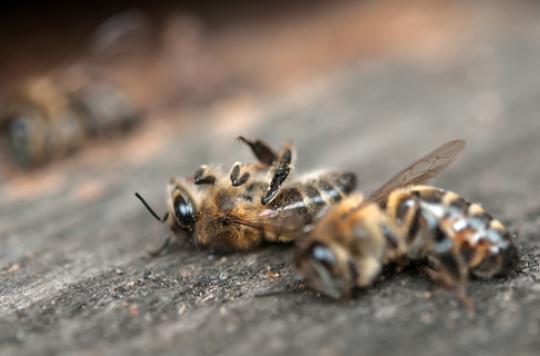 Zika : un insecticide tue des millions d'abeilles aux Etats-Unis