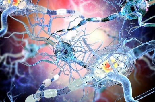 Des œstrogènes contre les lésions de la sclérose en plaques