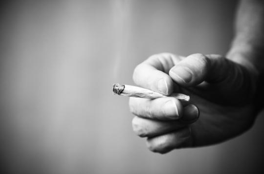 Cannabis K2 : une drogue de synthèse 85 fois plus puissante que la naturelle