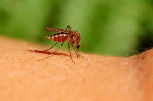 Zika : décès d'un premier nourrisson atteint de microcéphalie au Panama