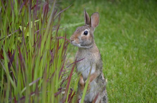 Allergies : les pollens de graminées n'abdiquent pas