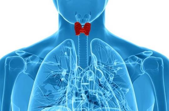 Les variations saisonnières naturelles de l'activité de la thyroïde dirigent notre sexualité