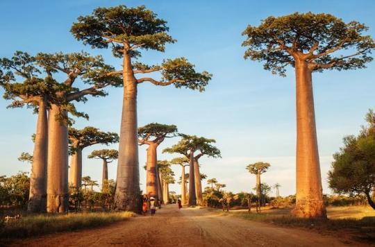 Bubonique ou pulmonaire, une épidémie de peste très inquiétante à Madagascar