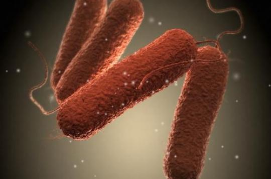 Lait contaminé : 10 points pour tout savoir sur les épidémies de salmonelles