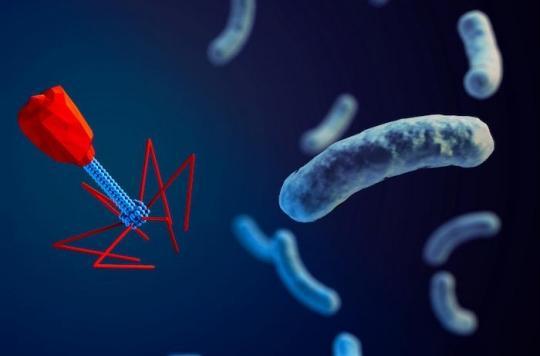 Les bactériophages sont une solution naturelle contre la résistance aux antibiotiques