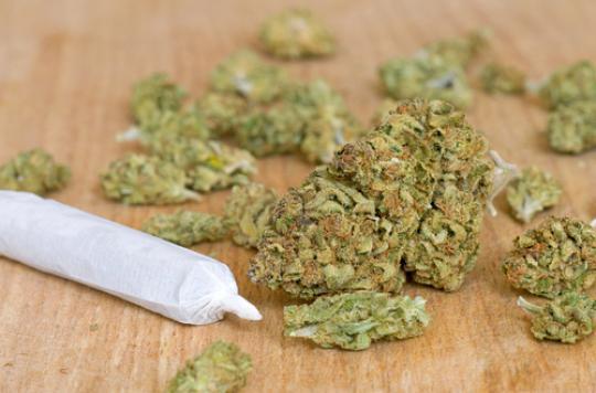 Stupéfiants : le nombre d'infractions multiplié par 6 en 20 ans