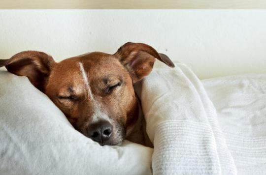 Le chien, un remède contre l'eczéma et l'asthme
