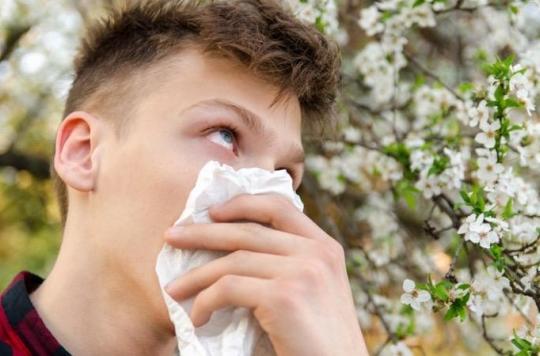 Allergie. La carte de France est presque rouge pour le pollen de bouleau