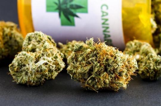 Cannabis : l'Uruguay ouvre un registre des consommateurs