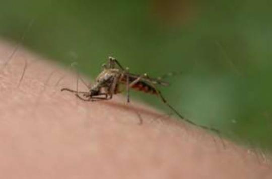 Paludisme : les chercheurs inquiets de la résistance aux traitements