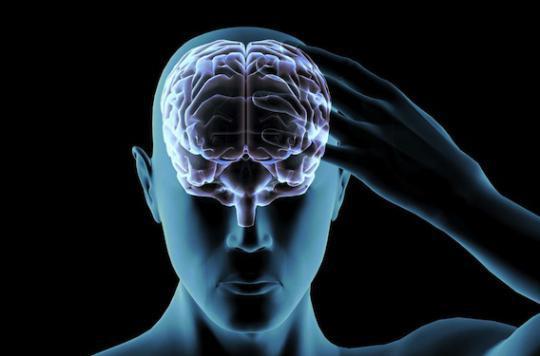 Cerveau :  la zone du bonheur localisée