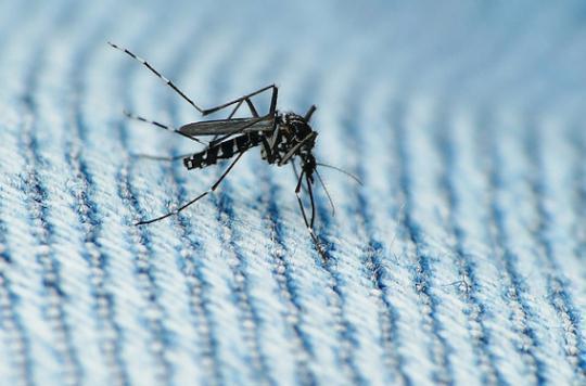 Zika : l'Espagne fait face à son premier cas de microcéphalie