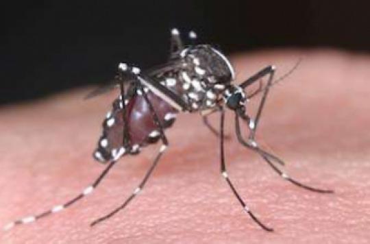Chikungunya : plus d'infections cérébrales chez les patients contaminés