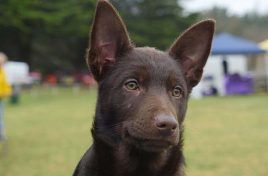 Rage : vacciner les chiens pour enrayer un fléau mondial