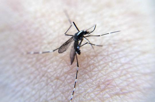 Zika : un premier cas identifié au Danemark