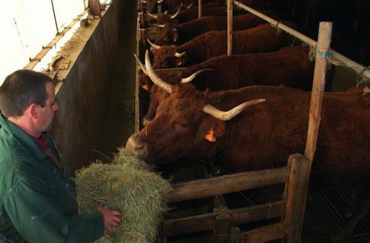 Vache folle : un espoir de traitement