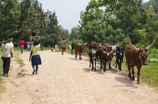 Zoonose : l'exemple de la Fièvre de la vallée du Rift