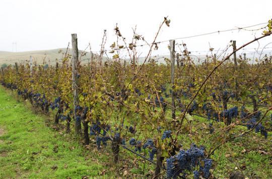Gironde : 160 écoles exposées aux pesticides