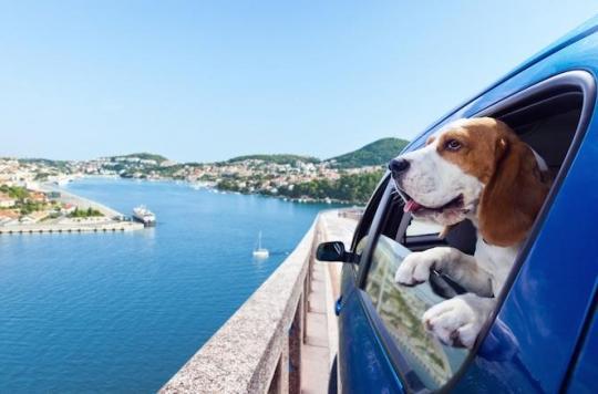 Rage : comment voyager avec son animal de compagnie