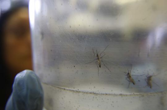 Zika : l'épidémie s'étend dans les Antilles françaises