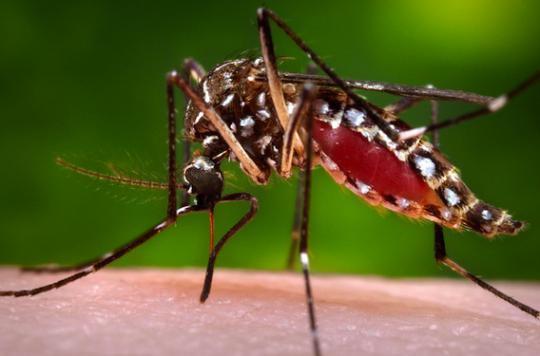 Zika : comment l'Institut Pasteur se mobilise contre le virus