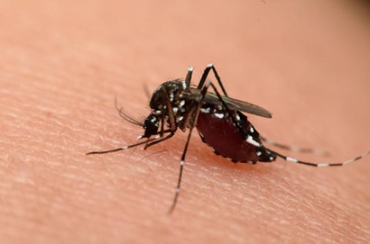 Zika : un homme est hospitalisé en région PACA