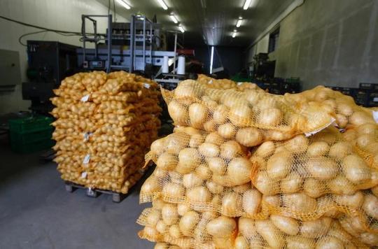 Clarebout Potatoes : l'infection mystérieuse touche 70 salariés