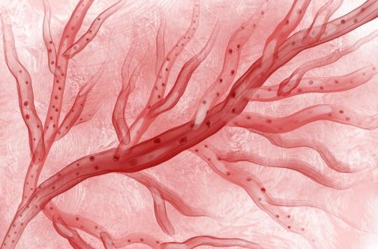 Parkinson, Alzheimer, épilepsie: un «cheval de Troie» pour faire passer le traitement dans le cerveau