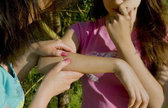 Maladie de Lyme : une application pour géolocaliser les tiques