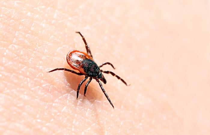 Maladie de Lyme : les associations optimistes mais vigilantes