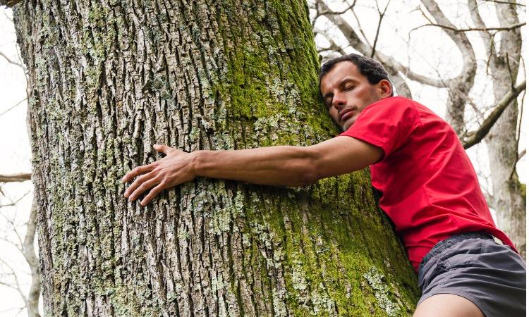 Sylvothérapie : prudence avant d'enlacer un arbre