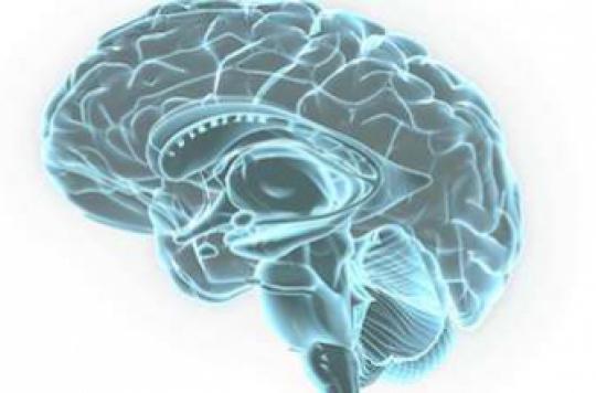 Les acides gras trans mauvais pour la mémoire des hommes